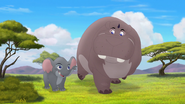 Follow-that-hippo (62)