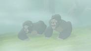The-lost-gorillas (250)