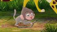 Baboons (321)