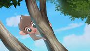 Baboons (198)