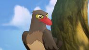 Ono-the-tickbird (457)