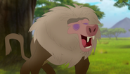 Baboons (133)