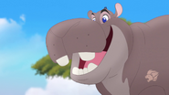 Follow-that-hippo (33)