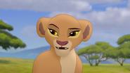 Baboons (27)