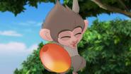 Baboons (187)
