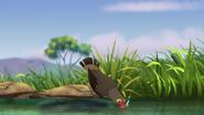 Ono-the-tickbird (222)