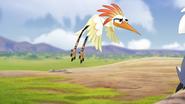 Ono-the-tickbird (146)