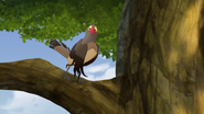 Ono-the-tickbird (410)