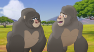The-lost-gorillas (107)