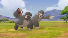 The-lost-gorillas (93)