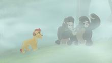 The-lost-gorillas (271)