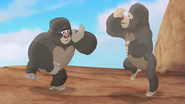 The-lost-gorillas (156)