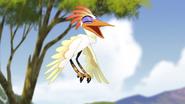 Ono-the-tickbird (170)