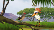 Ono-the-tickbird (343)