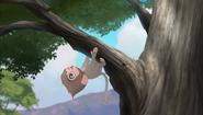 Baboons (218)