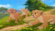 Baboons (303)