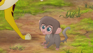 Baboons (88)