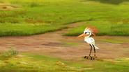 Ono-the-tickbird (178)