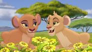 Baboons (67)