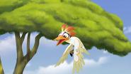 Ono-the-tickbird (79)