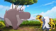 Follow-that-hippo (137)