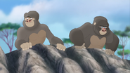 The-lost-gorillas (294)