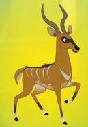 Bushbuck-p