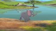 Follow-that-hippo (295)