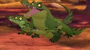 Let-sleeping-crocs-lie (341)