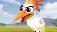 Ono-the-tickbird (277)