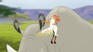 Ono-the-tickbird (185)