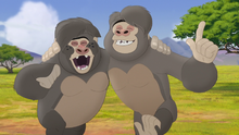 The-lost-gorillas (111)