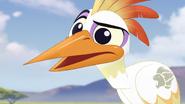 Ono-the-tickbird (282)