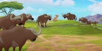 Vuruga Vuruga's Herd/Gallery