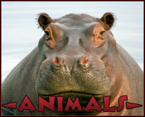 Animals-box