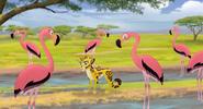FlamingosMOW