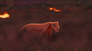 Lion-king2-disneyscreencaps.com-3884