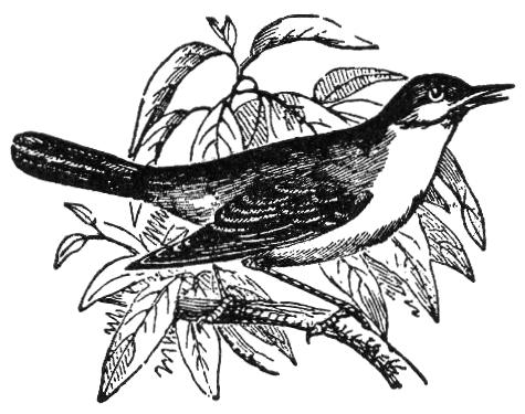 File:Nightingale1914NSRW.png
