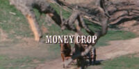 Episode 122: Money Crop