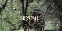 Episode 123: Survival