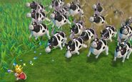 Rodeo Cow Stampede