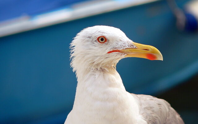 File:Seagull-in-venice-wallpapers 4193 2560x1600.jpg
