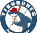 Tiburones de Puerto Peñasco