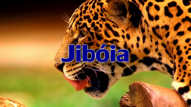 File:Jiboia Tribe.png