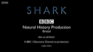 BBC Shark End Board 2015