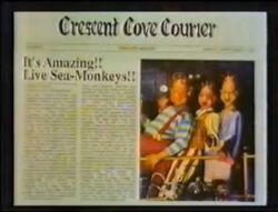 The Amazing Live Sea Monkeys