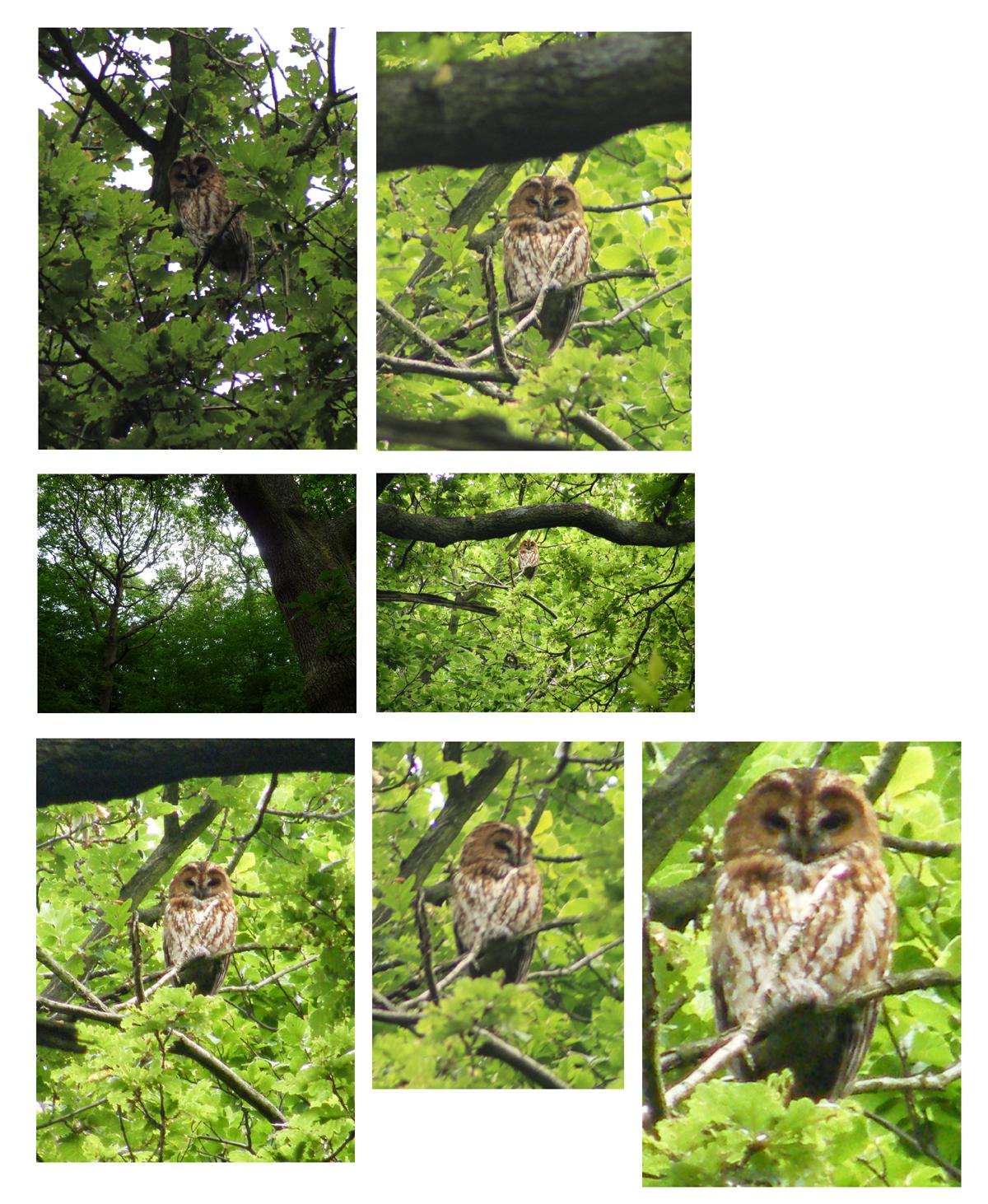 Owl pics june18th 2010