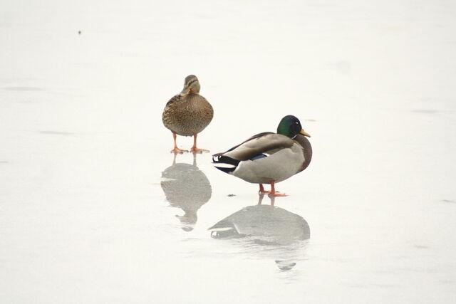 File:Wildlife 1262.jpg