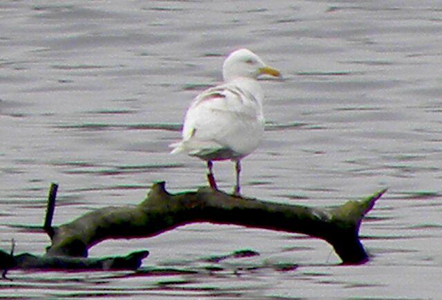 File:2012.05.19 SH1T at Brent Reservoir.jpg