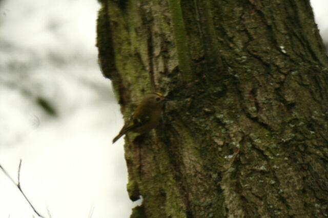 File:Wildlife 1368.jpg